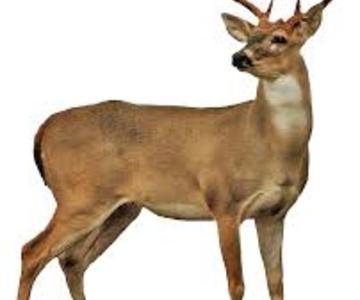 1507070778 deer