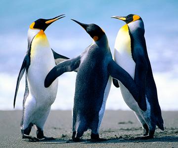 1507302227 penguins