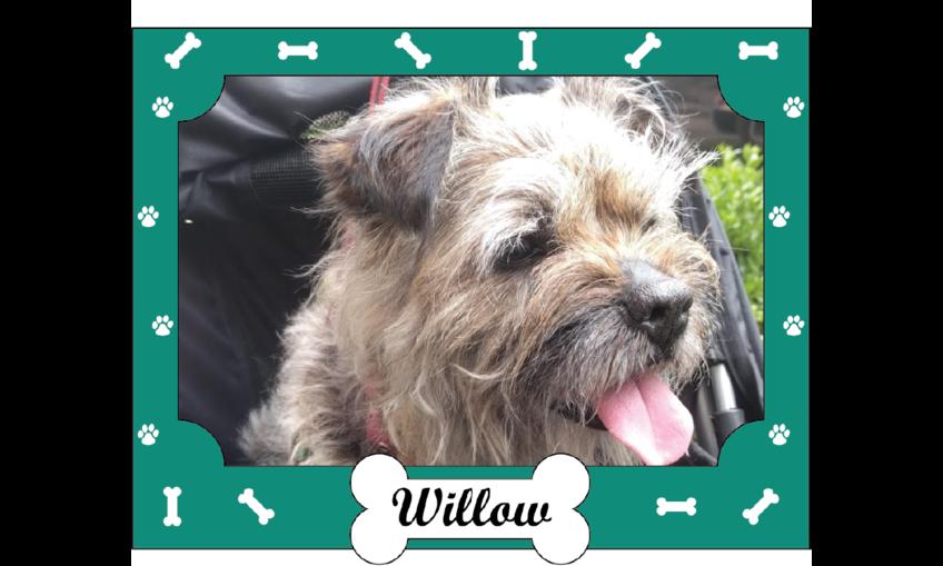 1530324911 dog picture frame with collar   leash holder rendering v6.1 01
