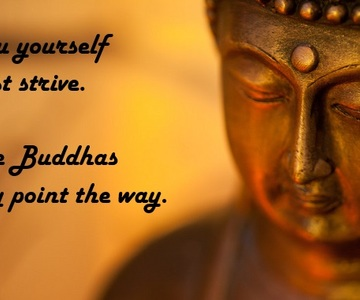 1544851290_buddha-quotes1