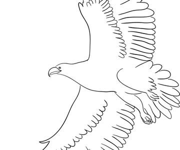 1557853317 eagle line art 01 vector 23063214