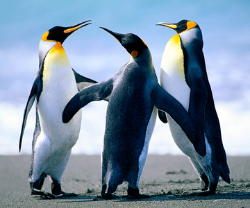 1563460018_penguins