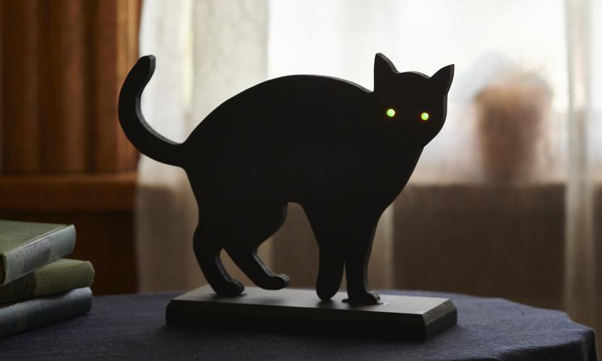 1447090584 cat env  0033