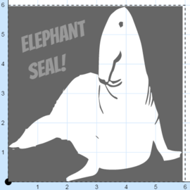 Elephant seal pic